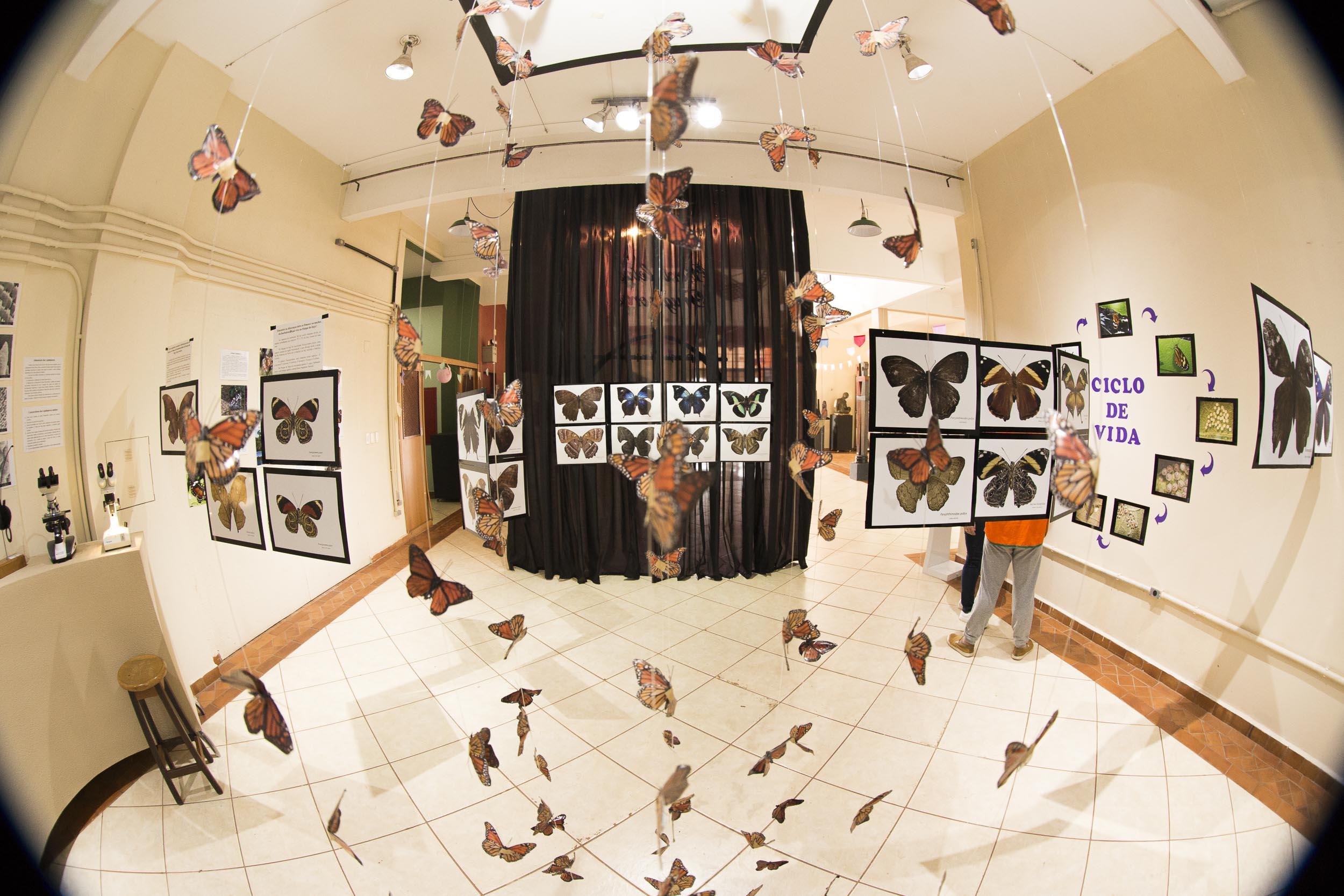 Museu abre mostra com fotos de borboletas do Parque do Ingá
