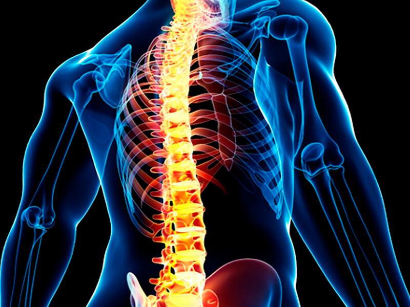 Você conhece a coluna vertebral? Exposição vai mostrar a anatomia do pilar que sustenta o corpo
