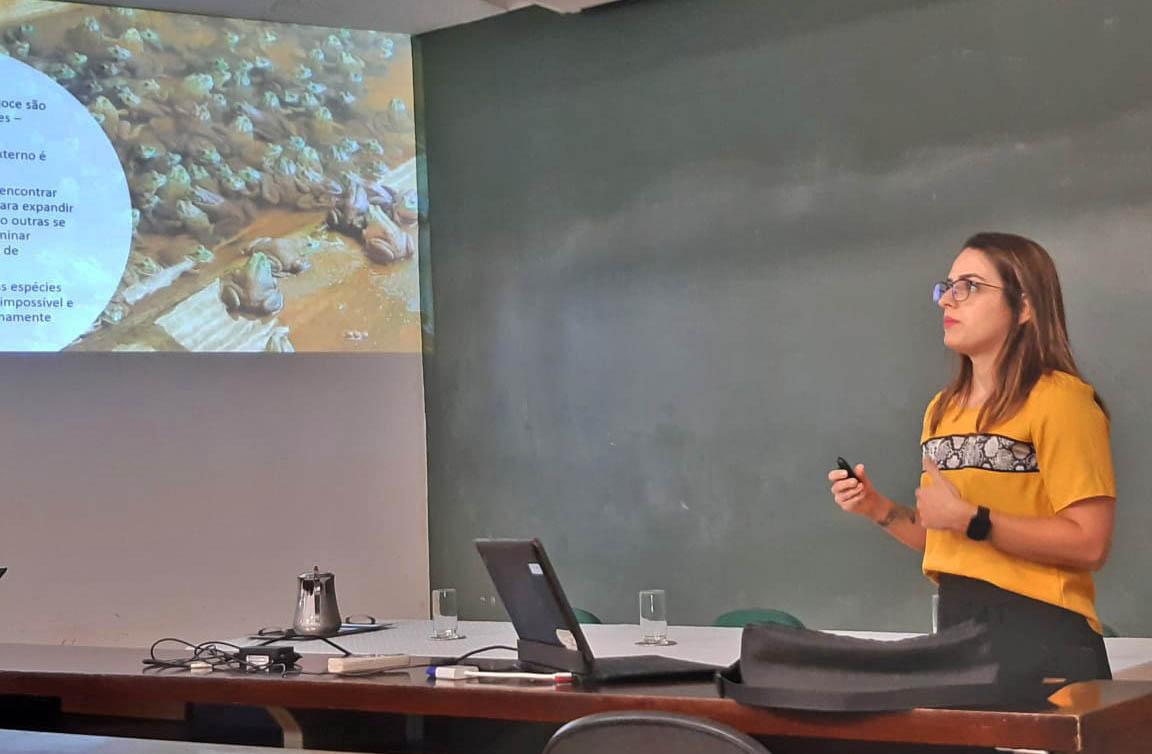 Faltam estudos sobre o potencial invasivo da rã-touro, diz bióloga